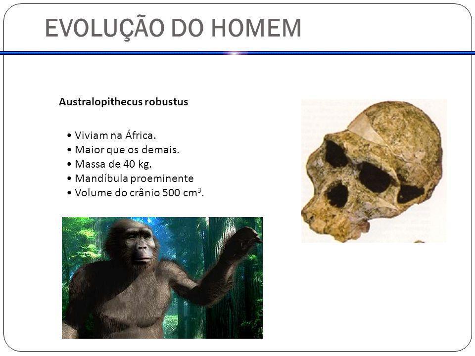 EVOLUÇÃO DO HOMEM Australopithecus robustus Viviam na África. Maior que os demais. Massa de 40 kg. Mandíbula proeminente Volume do crânio 500 cm 3.
