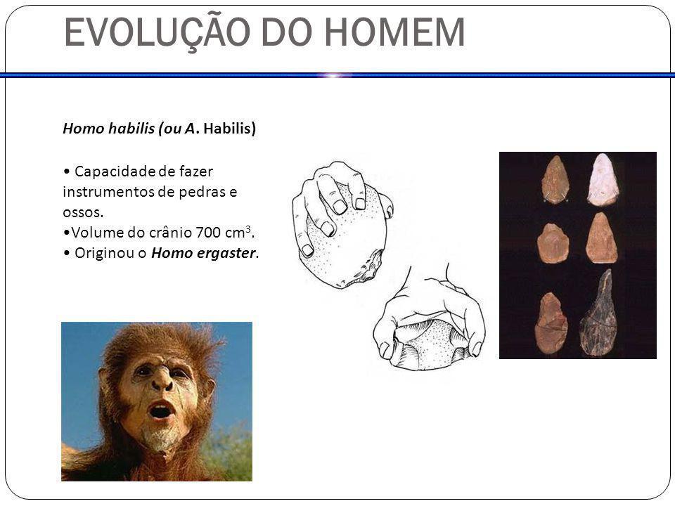 EVOLUÇÃO DO HOMEM Homo habilis (ou A. Habilis) Capacidade de fazer instrumentos de pedras e ossos. Volume do crânio 700 cm 3. Originou o Homo ergaster