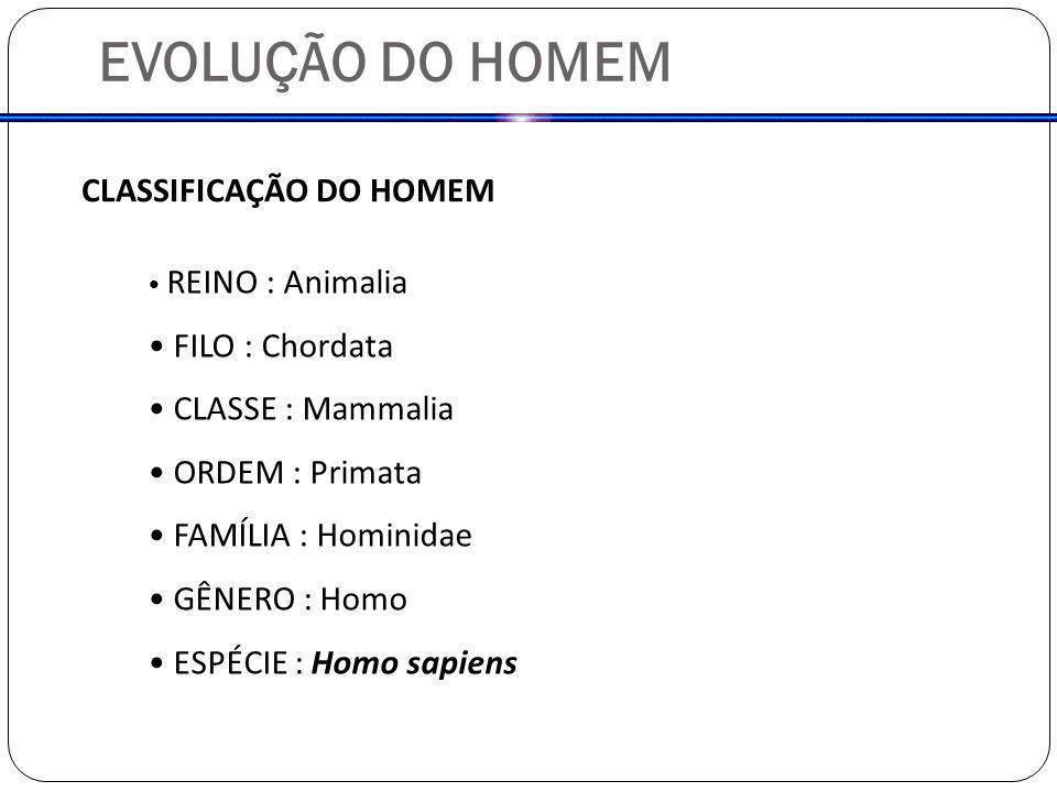 EVOLUÇÃO DO HOMEM CLASSIFICAÇÃO DO HOMEM REINO : Animalia FILO : Chordata CLASSE : Mammalia ORDEM : Primata FAMÍLIA : Hominidae GÊNERO : Homo ESPÉCIE