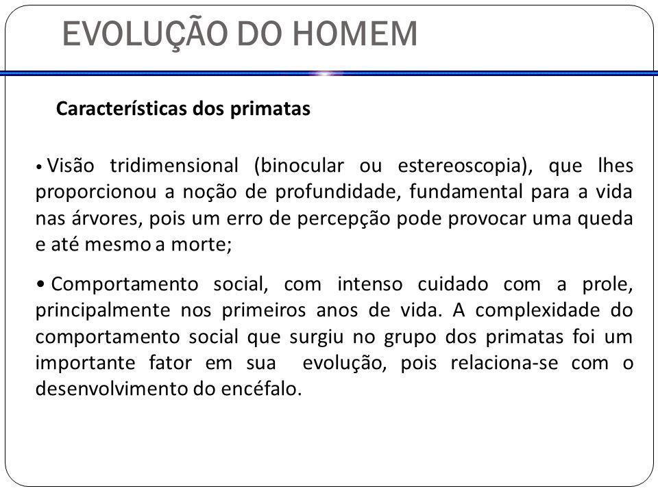 EVOLUÇÃO DO HOMEM Características dos primatas Visão tridimensional (binocular ou estereoscopia), que lhes proporcionou a noção de profundidade, funda