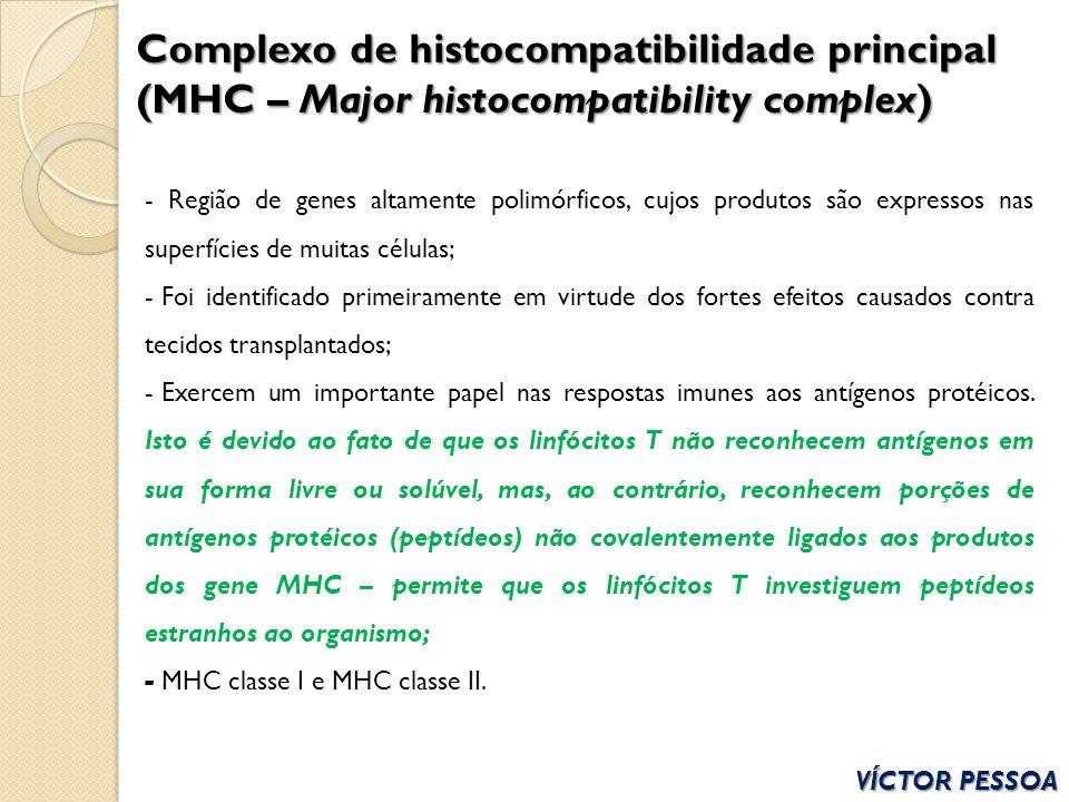 VÍCTOR PESSOA Complexo de histocompatibilidade principal (MHC – Major histocompatibility complex) - Região de genes altamente polimórficos, cujos prod