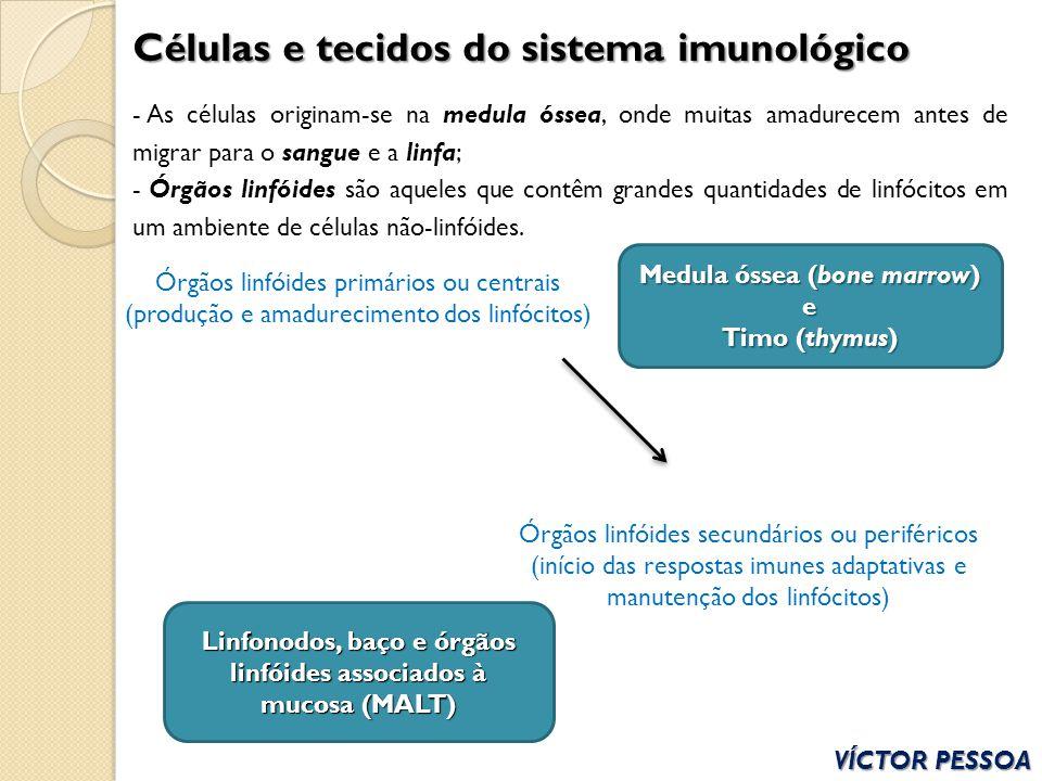 Células e tecidos do sistema imunológico - As células originam-se na medula óssea, onde muitas amadurecem antes de migrar para o sangue e a linfa; - Ó