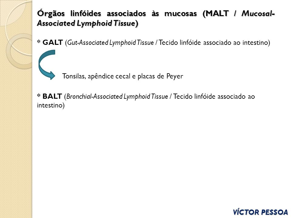 VÍCTOR PESSOA Órgãos linfóides associados às mucosas (MALT / Mucosal- Associated Lymphoid Tissue) * GALT (Gut-Associated Lymphoid Tissue / Tecido linf