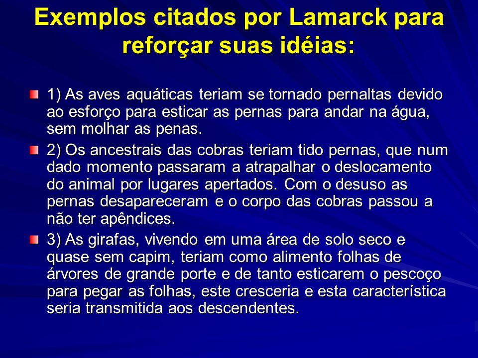 Exemplos citados por Lamarck para reforçar suas idéias: 1) As aves aquáticas teriam se tornado pernaltas devido ao esforço para esticar as pernas para