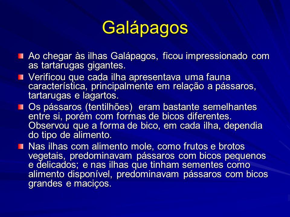 Galápagos Ao chegar às ilhas Galápagos, ficou impressionado com as tartarugas gigantes. Verificou que cada ilha apresentava uma fauna característica,