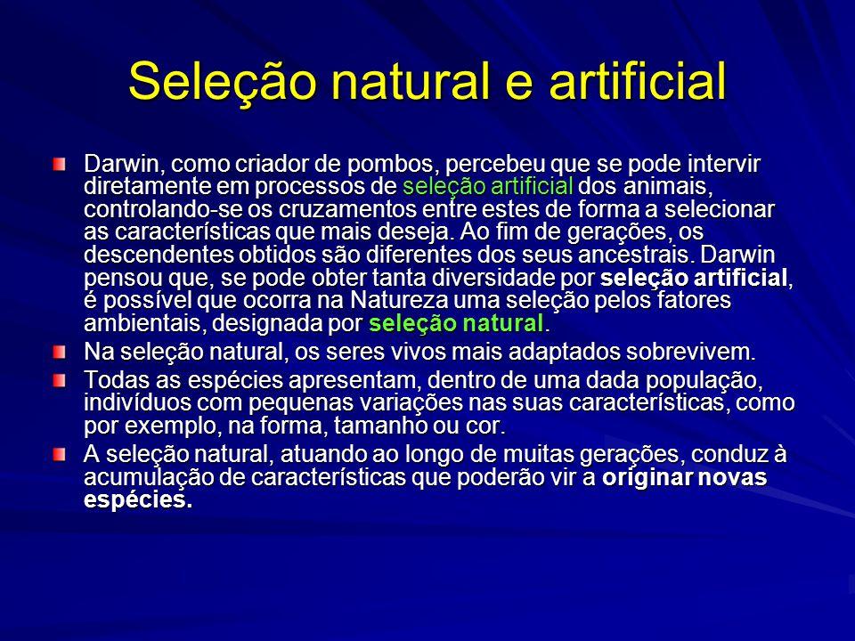 Seleção natural e artificial Darwin, como criador de pombos, percebeu que se pode intervir diretamente em processos de seleção artificial dos animais,
