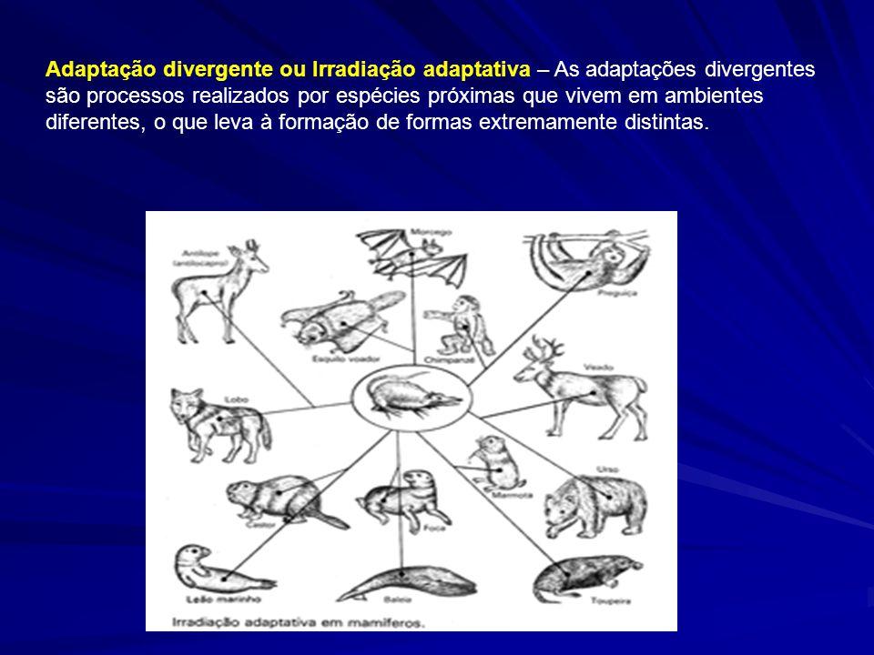Adaptação divergente ou Irradiação adaptativa – As adaptações divergentes são processos realizados por espécies próximas que vivem em ambientes difere