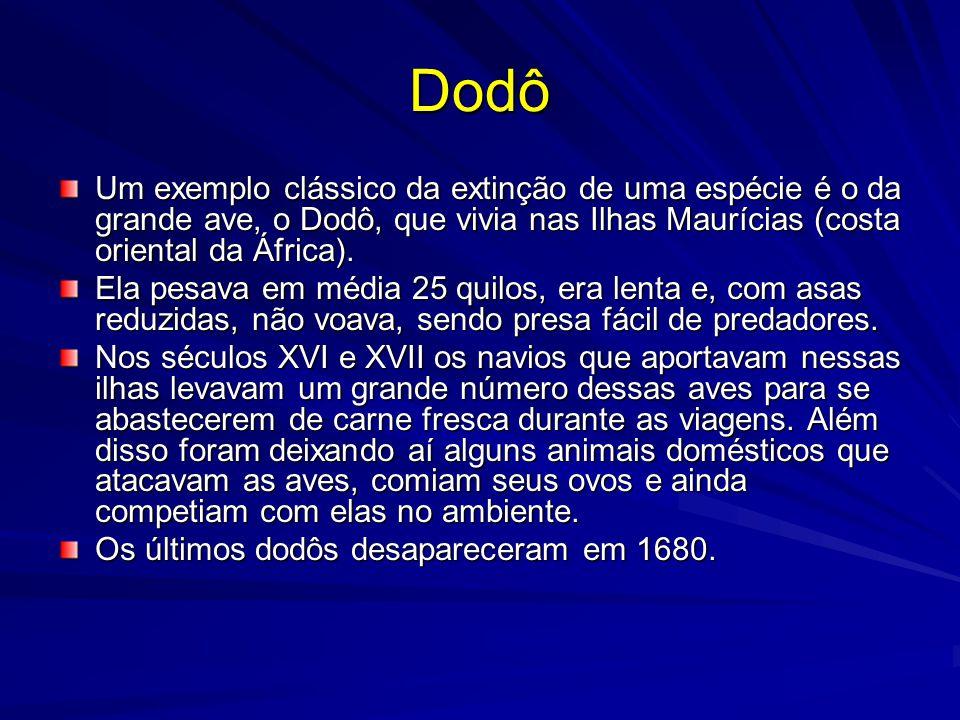 Dodô Um exemplo clássico da extinção de uma espécie é o da grande ave, o Dodô, que vivia nas Ilhas Maurícias (costa oriental da África). Ela pesava em