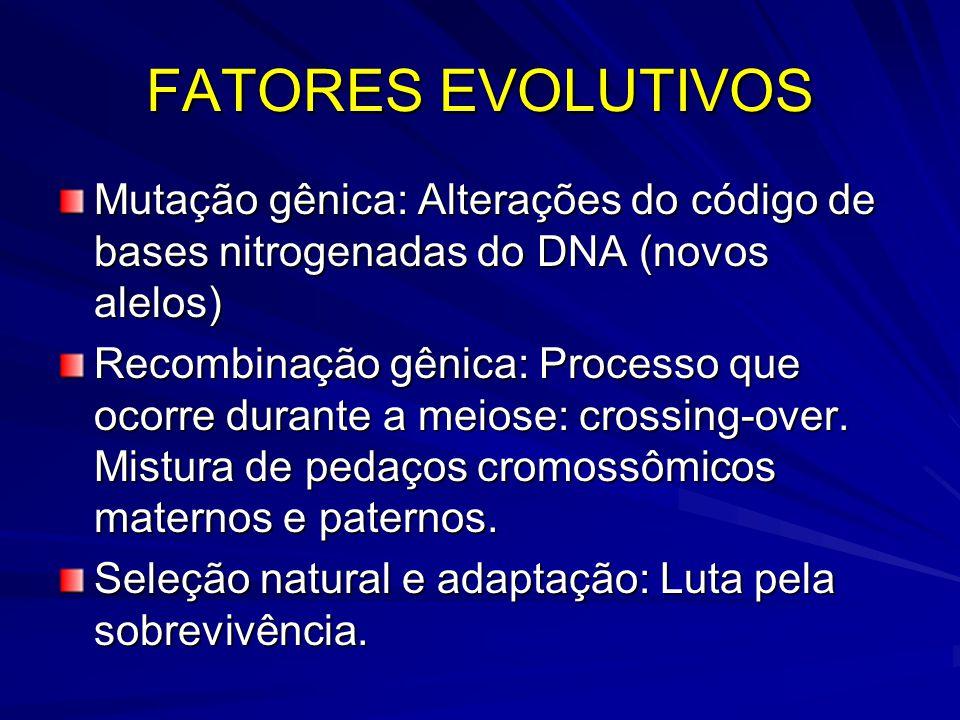 FATORES EVOLUTIVOS Mutação gênica: Alterações do código de bases nitrogenadas do DNA (novos alelos) Recombinação gênica: Processo que ocorre durante a