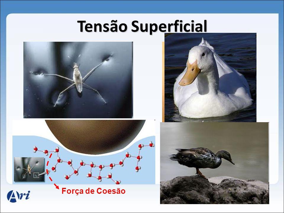 Tensão Superficial Força de Coesão