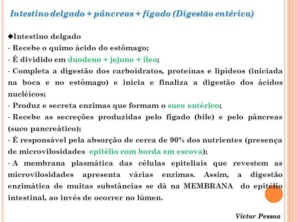 Intestino delgado + pâncreas + fígado (Digestão entérica) Intestino delgado - Recebe o quimo ácido do estômago; - É dividido em duodeno + jejuno + íle