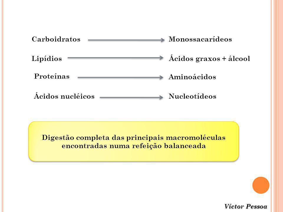 CarboidratosMonossacarídeos LipídiosÁcidos graxos + álcool Proteínas Aminoácidos NucleotídeosÁcidos nucléicos Digestão completa das principais macromo