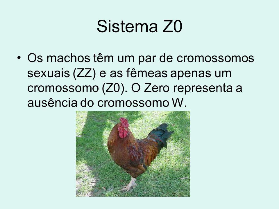 Sistema Z0 Os machos têm um par de cromossomos sexuais (ZZ) e as fêmeas apenas um cromossomo (Z0). O Zero representa a ausência do cromossomo W.