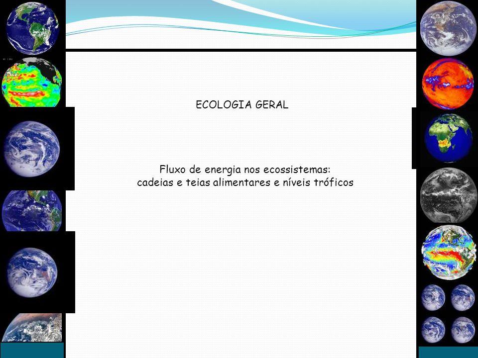 ECOLOGIA GERAL Fluxo de energia nos ecossistemas: cadeias e teias alimentares e níveis tróficos