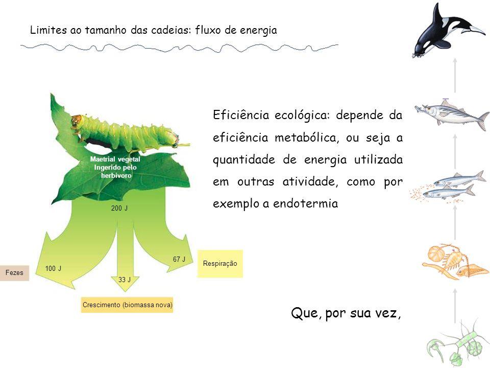 Limites ao tamanho das cadeias: fluxo de energia Maetrial vegetal Ingerido pelo herbívoro Respiração Crescimento (biomassa nova) Fezes 100 J 33 J 200 J 67 J Eficiência ecológica: depende da eficiência metabólica, ou seja a quantidade de energia utilizada em outras atividade, como por exemplo a endotermia Que, por sua vez,