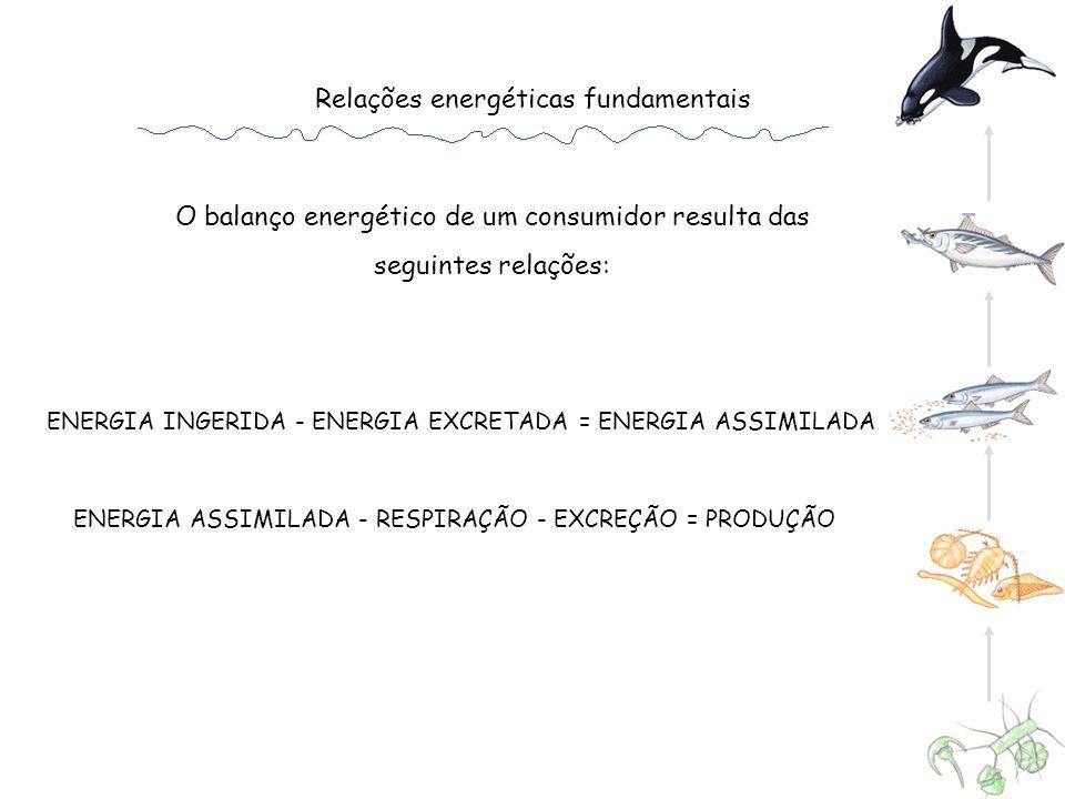 Relações energéticas fundamentais O balanço energético de um consumidor resulta das seguintes relações: ENERGIA INGERIDA - ENERGIA EXCRETADA = ENERGIA