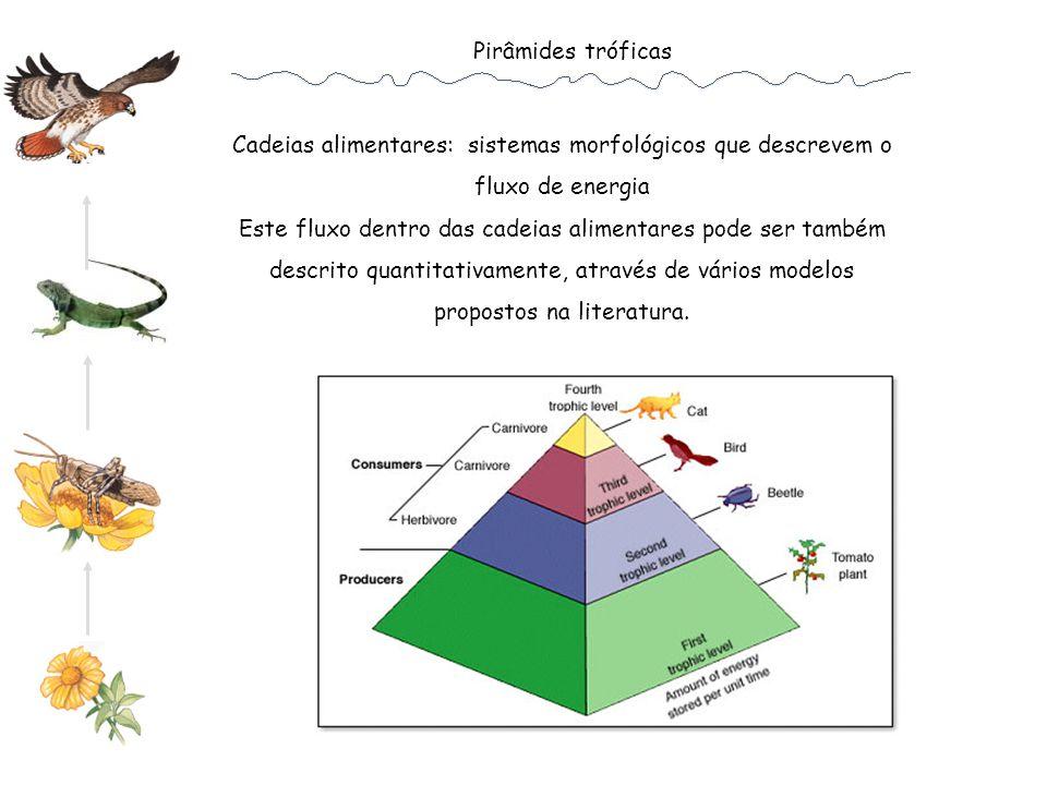 Cadeias alimentares: sistemas morfológicos que descrevem o fluxo de energia Este fluxo dentro das cadeias alimentares pode ser também descrito quantitativamente, através de vários modelos propostos na literatura.