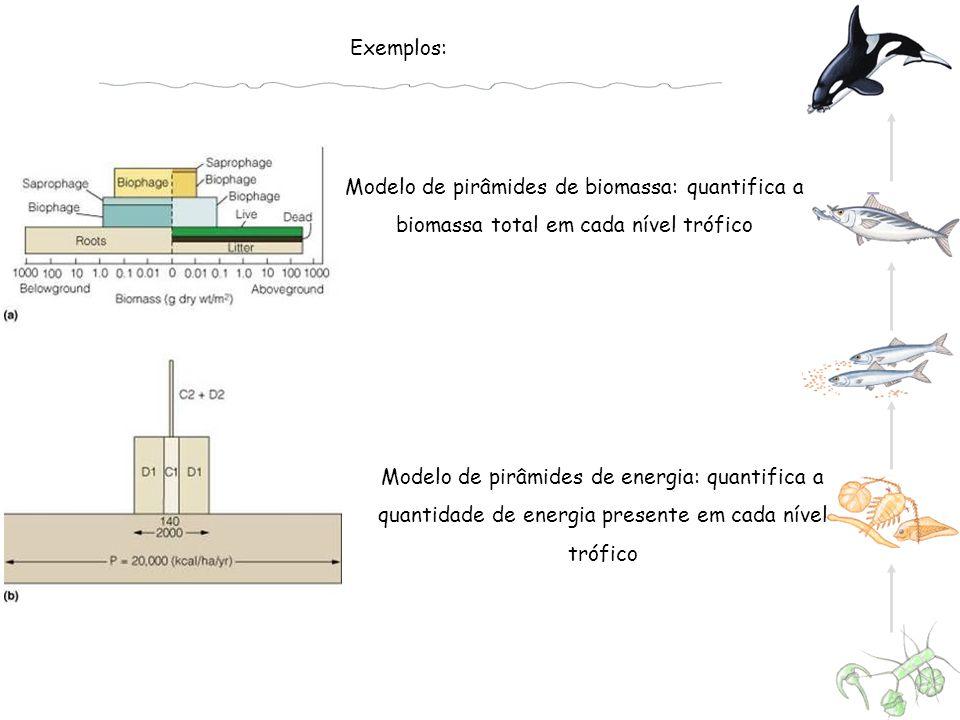 Modelo de pirâmides de biomassa: quantifica a biomassa total em cada nível trófico Exemplos: Modelo de pirâmides de energia: quantifica a quantidade de energia presente em cada nível trófico