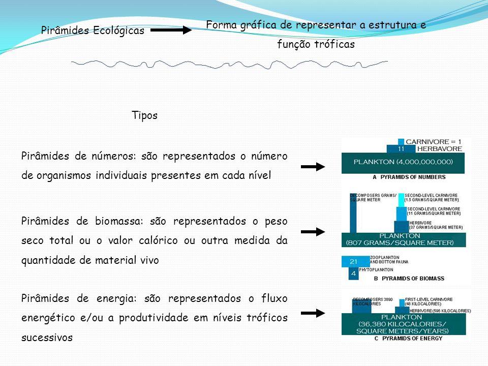 Forma gráfica de representar a estrutura e função tróficas Pirâmides Ecológicas Tipos Pirâmides de biomassa: são representados o peso seco total ou o valor calórico ou outra medida da quantidade de material vivo Pirâmides de números: são representados o número de organismos individuais presentes em cada nível Pirâmides de energia: são representados o fluxo energético e/ou a produtividade em níveis tróficos sucessivos