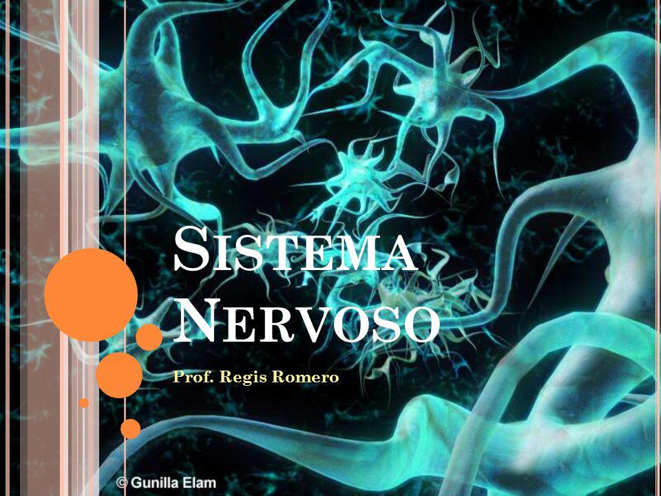 S ISTEMA N ERVOSO Prof. Regis Romero