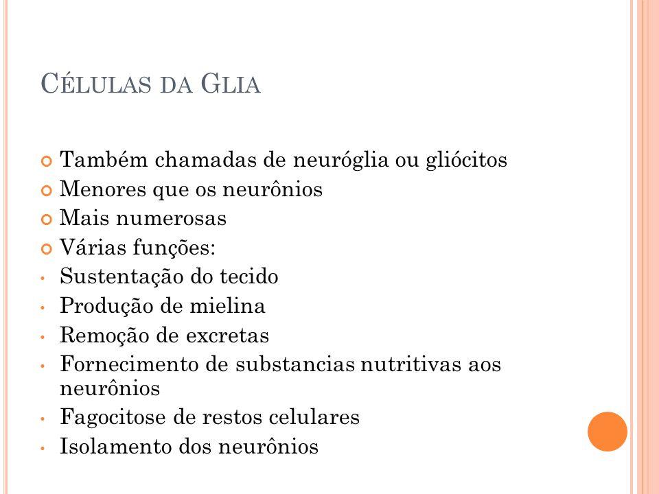C ÉLULAS DA G LIA Também chamadas de neuróglia ou gliócitos Menores que os neurônios Mais numerosas Várias funções: Sustentação do tecido Produção de mielina Remoção de excretas Fornecimento de substancias nutritivas aos neurônios Fagocitose de restos celulares Isolamento dos neurônios