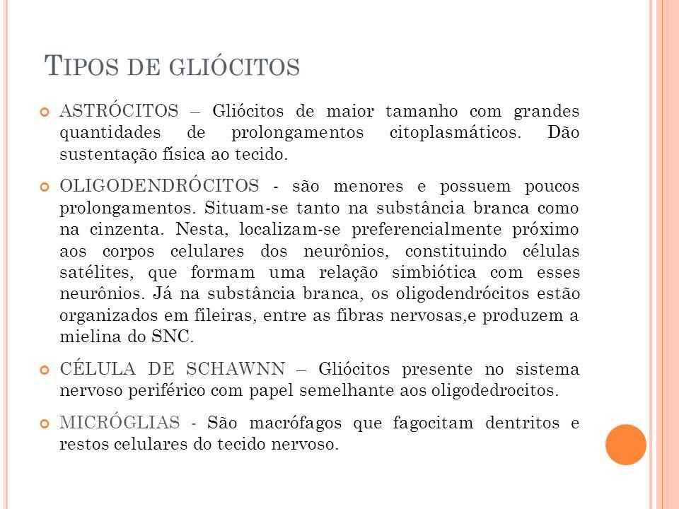 T IPOS DE GLIÓCITOS ASTRÓCITOS – Gliócitos de maior tamanho com grandes quantidades de prolongamentos citoplasmáticos. Dão sustentação física ao tecid