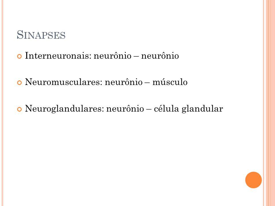 S INAPSES Interneuronais: neurônio – neurônio Neuromusculares: neurônio – músculo Neuroglandulares: neurônio – célula glandular