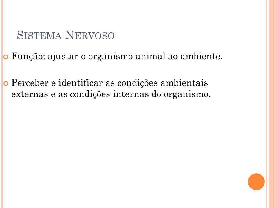 S ISTEMA N ERVOSO Função: ajustar o organismo animal ao ambiente. Perceber e identificar as condições ambientais externas e as condições internas do o