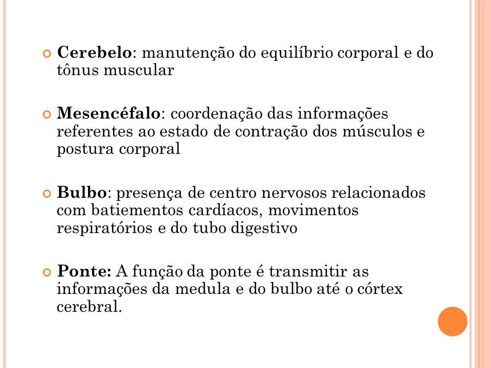 Cerebelo : manutenção do equilíbrio corporal e do tônus muscular Mesencéfalo : coordenação das informações referentes ao estado de contração dos múscu