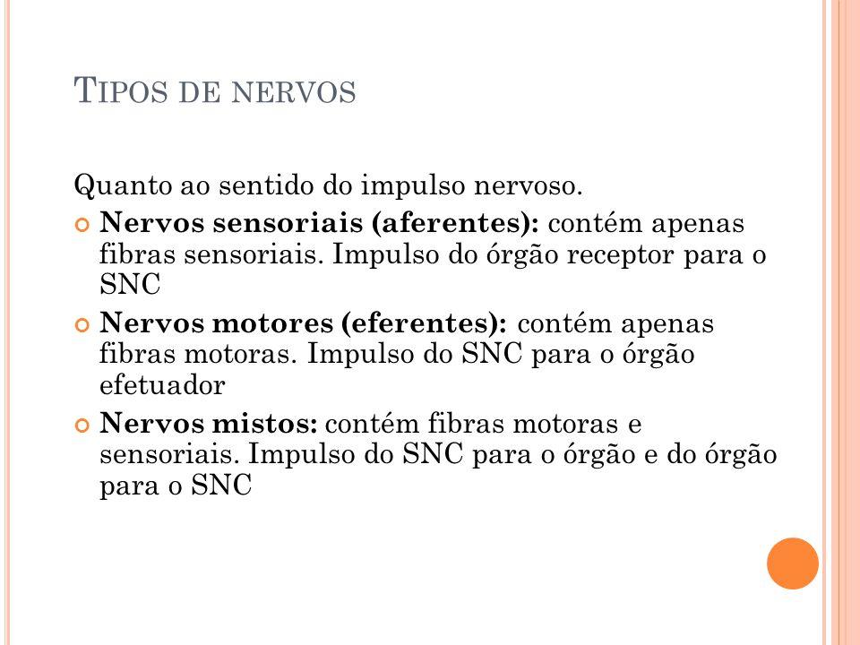 T IPOS DE NERVOS Quanto ao sentido do impulso nervoso. Nervos sensoriais (aferentes): contém apenas fibras sensoriais. Impulso do órgão receptor para