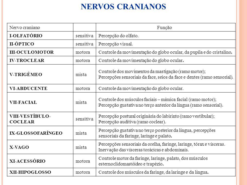 47 Nervo craniano Função I-OLFATÓRIOsensitivaPercepção do olfato. II-ÓPTICOsensitivaPercepção visual. III-OCULOMOTORmotoraControle da movimentação do