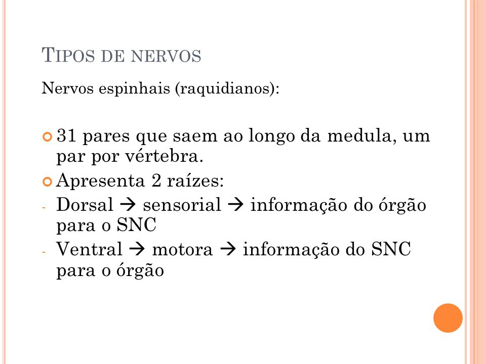 T IPOS DE NERVOS Nervos espinhais (raquidianos): 31 pares que saem ao longo da medula, um par por vértebra. Apresenta 2 raízes: - Dorsal sensorial inf