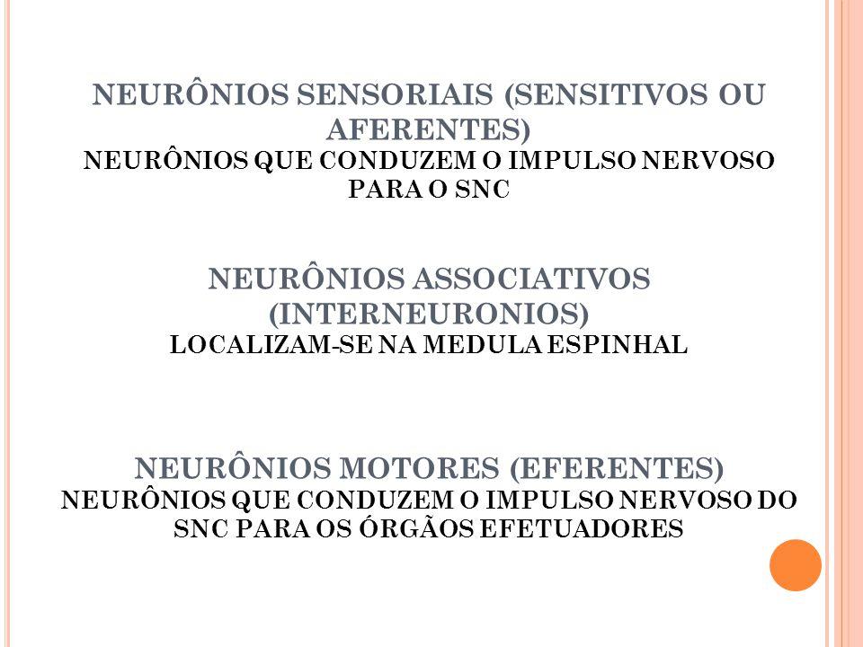 NEURÔNIOS SENSORIAIS (SENSITIVOS OU AFERENTES) NEURÔNIOS QUE CONDUZEM O IMPULSO NERVOSO PARA O SNC NEURÔNIOS ASSOCIATIVOS (INTERNEURONIOS) LOCALIZAM-SE NA MEDULA ESPINHAL NEURÔNIOS MOTORES (EFERENTES) NEURÔNIOS QUE CONDUZEM O IMPULSO NERVOSO DO SNC PARA OS ÓRGÃOS EFETUADORES