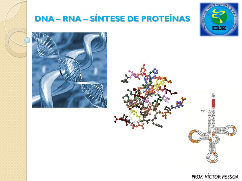 ÁCIDOS NUCLÉICOS (DNA / RNA) – CARACTERÍSTICAS GERAIS PROF.