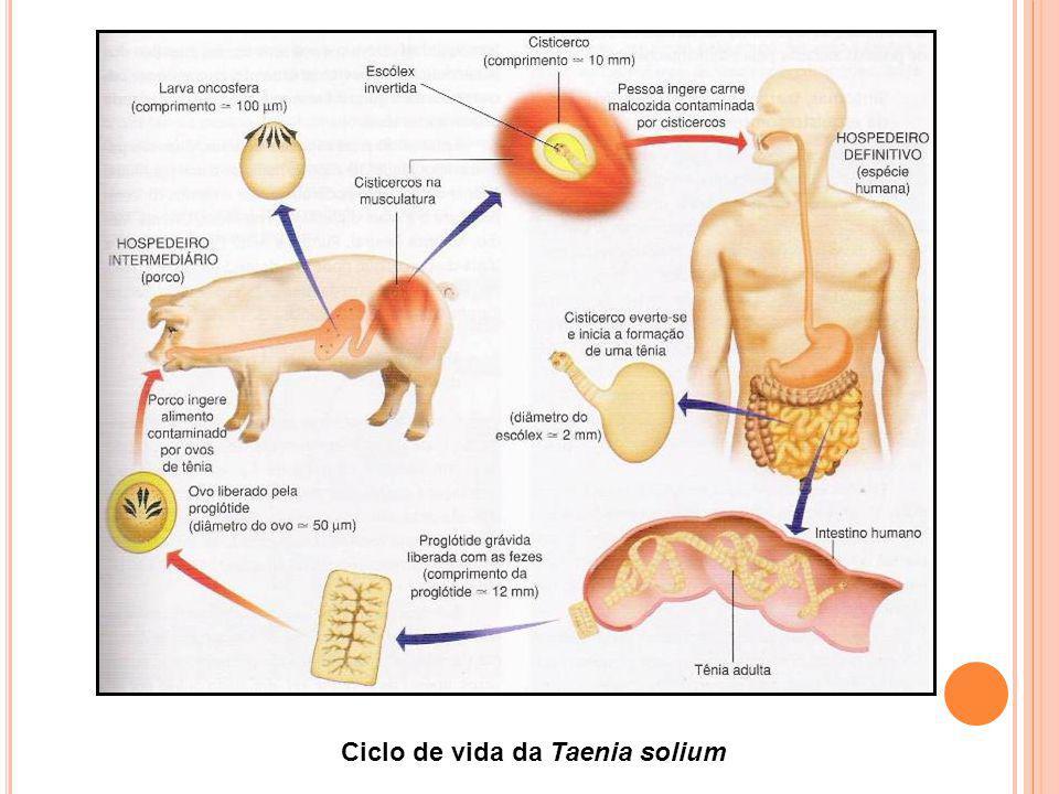 Ciclo de vida da Taenia solium