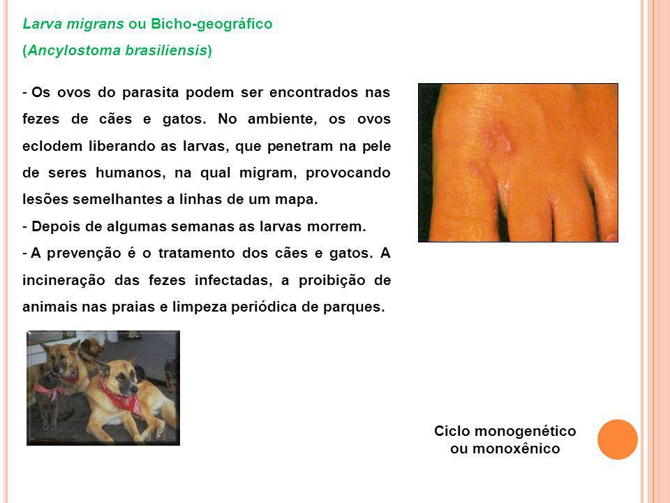 Larva migrans ou Bicho-geográfico (Ancylostoma brasiliensis) - Os ovos do parasita podem ser encontrados nas fezes de cães e gatos.