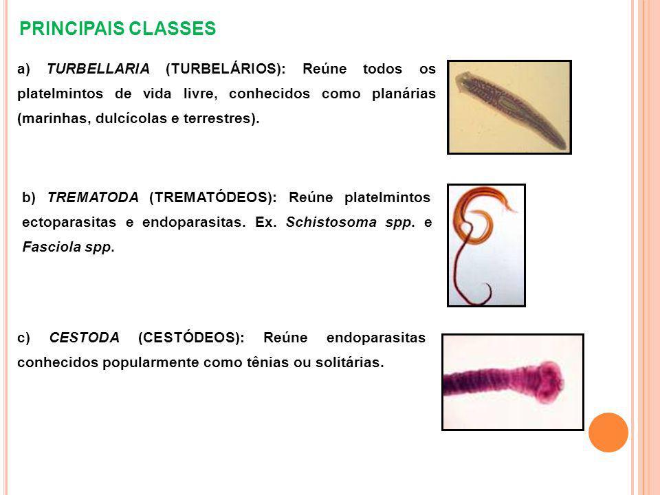 PRINCIPAIS CLASSES a) TURBELLARIA (TURBELÁRIOS): Reúne todos os platelmintos de vida livre, conhecidos como planárias (marinhas, dulcícolas e terrestres).