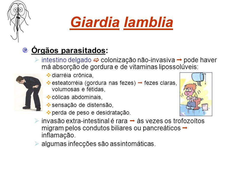 Giardia lamblia Órgãos parasitados: intestino delgado colonização não-invasiva pode haver má absorção de gordura e de vitaminas lipossolúveis: diarréi