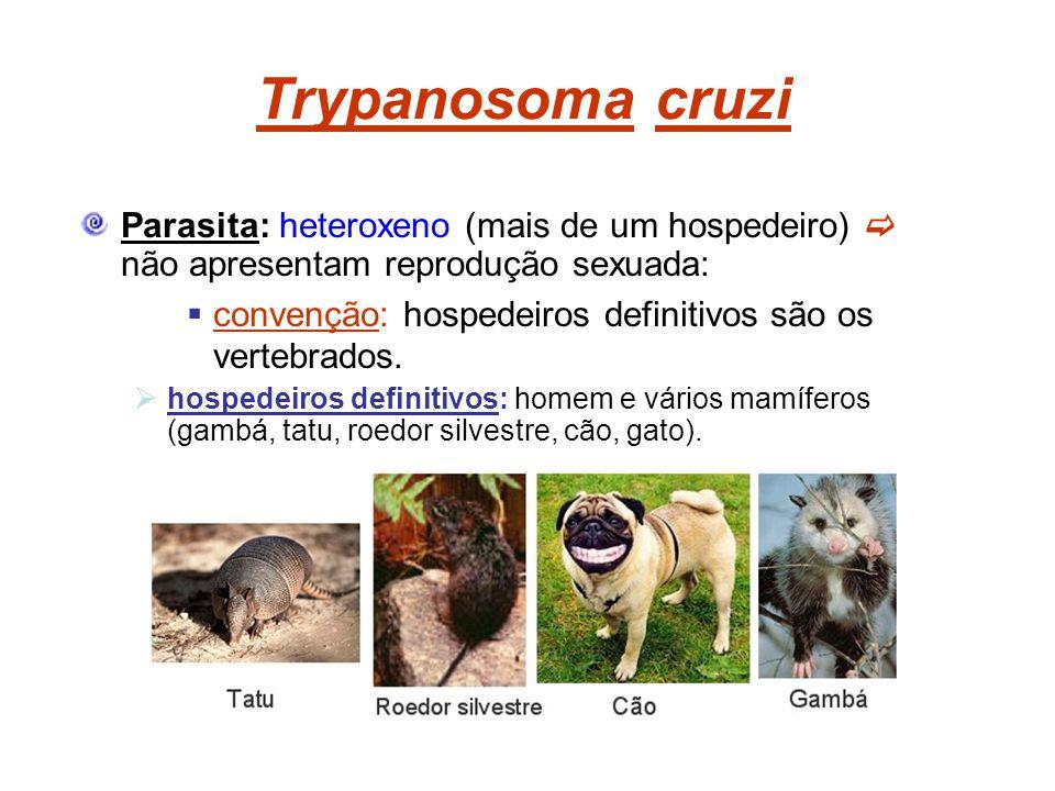 Trypanosoma cruzi Parasita: heteroxeno (mais de um hospedeiro) não apresentam reprodução sexuada: convenção: hospedeiros definitivos são os vertebrado
