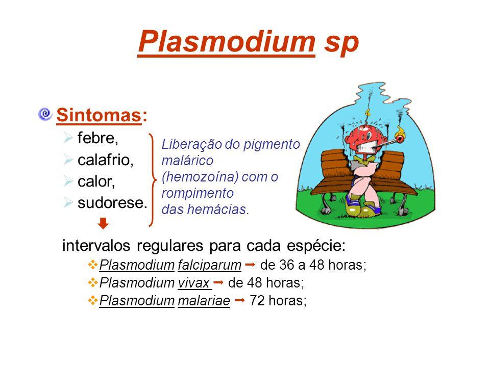 Plasmodium sp Sintomas: febre, calafrio, calor, sudorese. intervalos regulares para cada espécie: Plasmodium falciparum de 36 a 48 horas; Plasmodium v