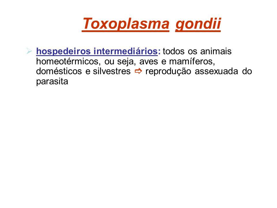 Toxoplasma gondii hospedeiros intermediários: todos os animais homeotérmicos, ou seja, aves e mamíferos, domésticos e silvestres reprodução assexuada
