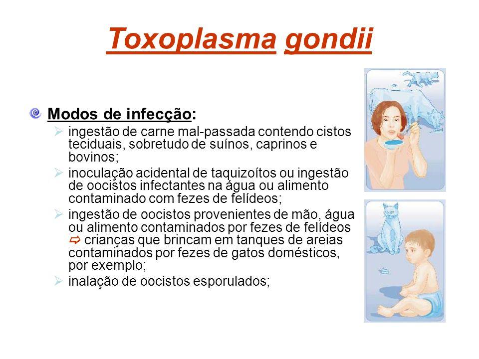 Toxoplasma gondii Modos de infecção: ingestão de carne mal-passada contendo cistos teciduais, sobretudo de suínos, caprinos e bovinos; inoculação acid