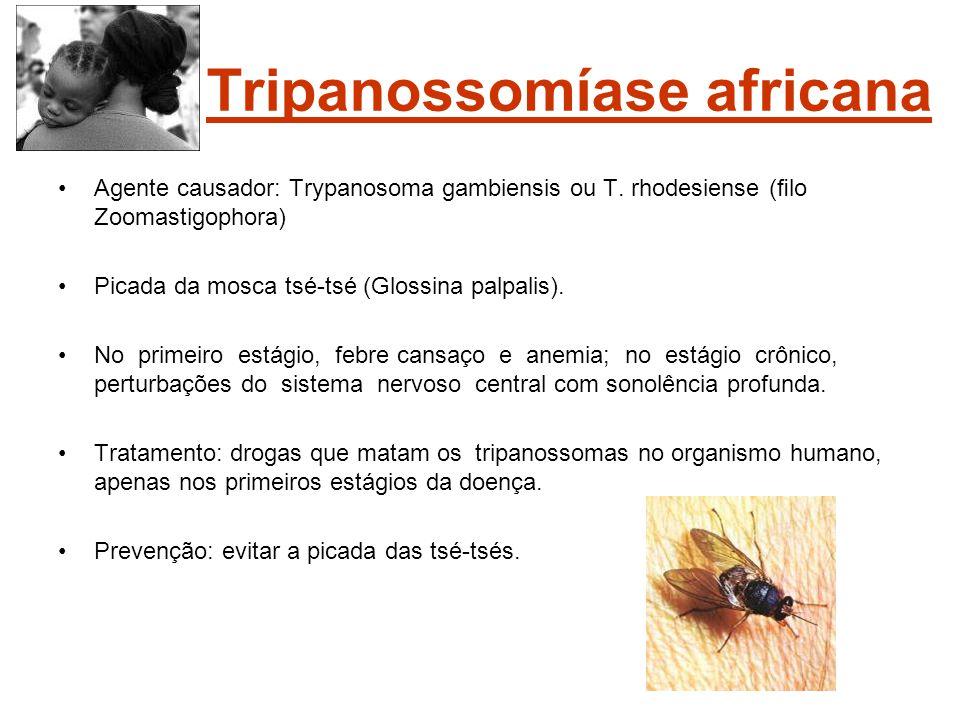 Tripanossomíase africana Agente causador: Trypanosoma gambiensis ou T. rhodesiense (lo Zoomastigophora) Picada da mosca tsé-tsé (Glossina palpalis). N