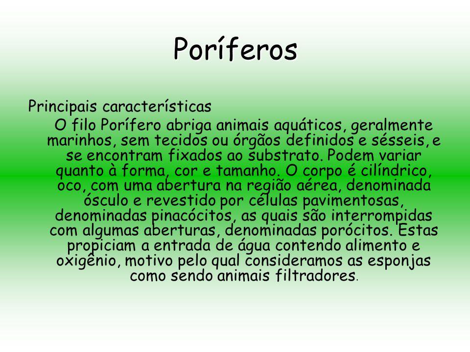 Poríferos Principais características O filo Porífero abriga animais aquáticos, geralmente marinhos, sem tecidos ou órgãos definidos e sésseis, e se encontram fixados ao substrato.