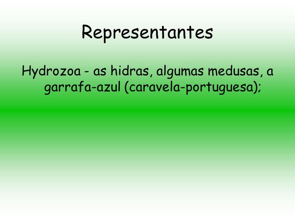 Representantes O filo Cnidária está dividido em quatro classes de organismos atuais e mais uma de fósseis: Anthozoários - as anêmonas-do-mar e corais