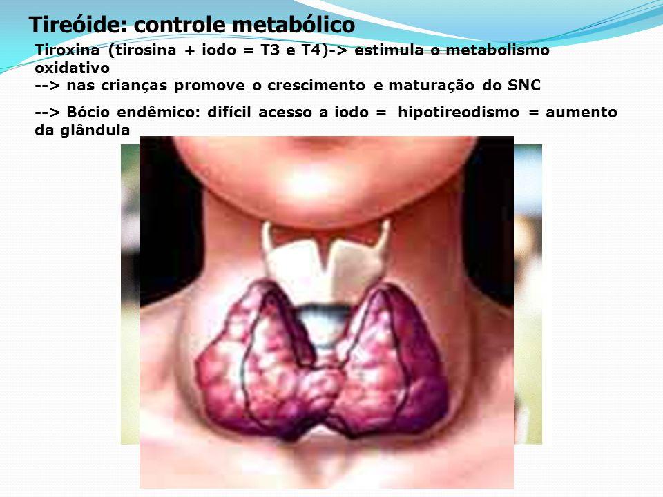 Hormônio de Crescimento (somatotrofina) 1. Hormônio do crescimento induz o crescimento de músculos e ossos. <- Gigantismo e nanismo hipofisário