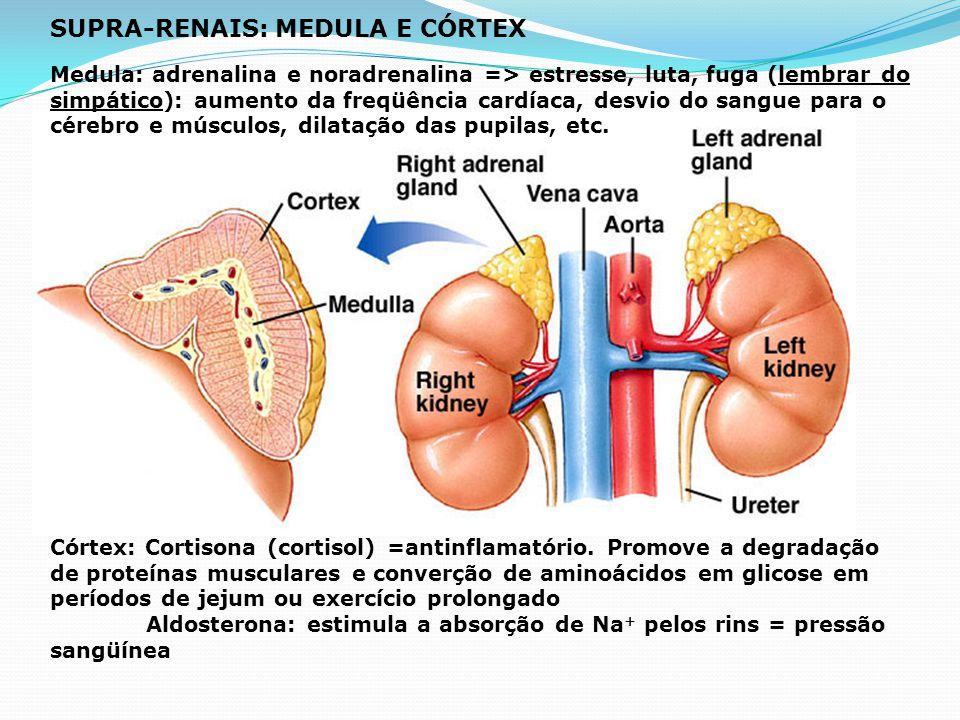 <- Ações antagônicas da insulina e do glucagon Pâncreas -> Exócrina: e Endócrina Diabete melitus: altos níveis de glicose no sangue e urina Tipo 1: Ju