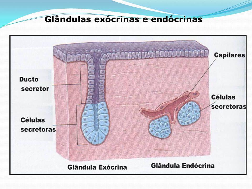 SISTEMA ENDÓCRINO Glândulas endócrinas x exócrinas Ação hormonal Principais glândulas endócrinas humanas: localização, ação, distúrbios Retroalimentaç