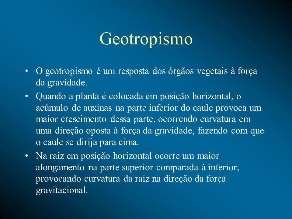 Geotropismo O geotropismo é um resposta dos órgãos vegetais à força da gravidade.