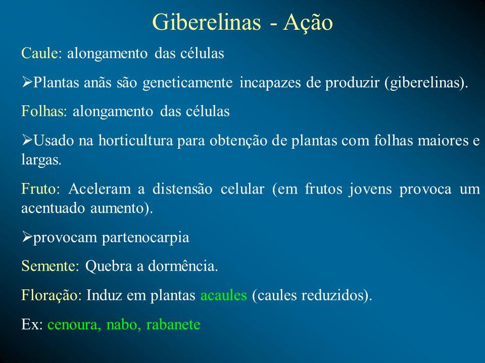 Giberelinas - Ação Caule: alongamento das células Plantas anãs são geneticamente incapazes de produzir (giberelinas). Folhas: alongamento das células
